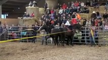 Fête du ranch 08, voltige cosaque