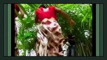 Ivory Coast - Dance Galore - Aesthetic Booty Dance - Mapouka Mania I