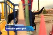 TVE da cobertura al estudio de Pharmadiet y la FOPG (Fundación ONCE del perro guía)