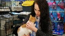 O'FallonTV: Heartland Humane Society of Missouri   O'Fallon, Missouri