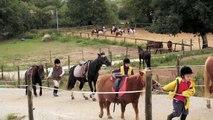 Centre Equestre de Bilaire : l'Equitation au coeur de Vannes