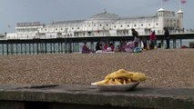Seagulls terrorise British holidaymakers