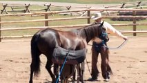 Why Throw A Lead Rope Over Your Horse's Back?