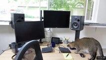 Un chat qui doit chasser pour obtenir ses croquettes