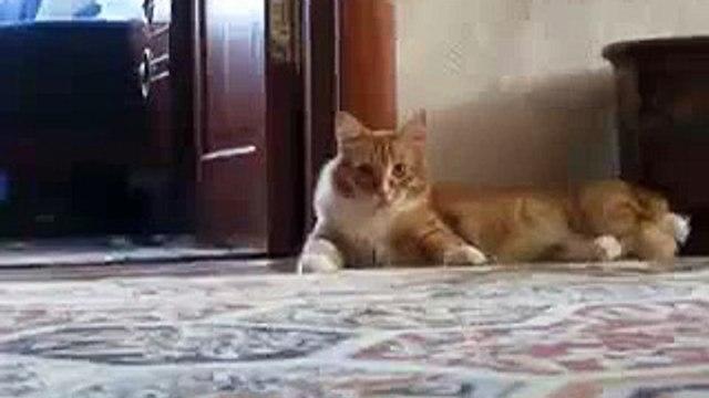 Cat gone crazy suddenly