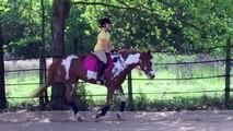 Quarter Horse Paint Mare for Sale 2