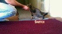 Moe does dog tricks- Cat does dog tricks