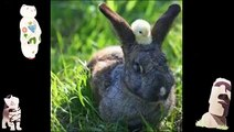 Funny Animals Jokes Animal Compilation Animals Planet Videos Images Of Funny Videos