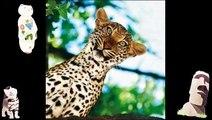 Funny Animals Jokes Animal Compilation Free Online Funny Videos Funny Animal Jokes