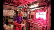 Les astronautes vont manger des légumes cultivés dans l'espace ! ISS - Station Spatiale Internationale