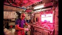 Nasa - La laitue de l'espace