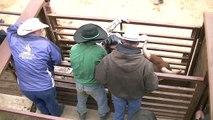 Utah High School Rodeo-Bullriding-Emery Rodeo, Castle Dale 4.14.2012.mp4
