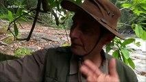 Documentaire sur le caiman noir d'Amérique Du Sud