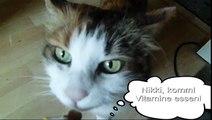 My Funny Talking Cat Nikki Says No Vitamines (meine sprechende Katze will keine Vitamine)