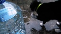 Le chat Chitrouille adore vraiment l'eau! - Cute little cat loves water very much! -   楽しいチャット- 猫