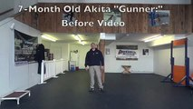 7-Month Old Akita Before and After Video! Dog Training in Northern Virginia