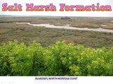 Salt Marsh Formation