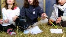 ☞ Challenge | Dessine-moi un mouton !  (version équitation)