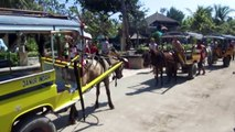 The Condition of Horse Carriages - Tiny Horses carrying tourists seen out of breath