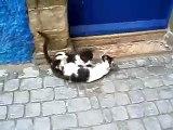 Chats coquins