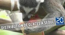 Le zoo de Séoul distribue des glaces à ses animaux