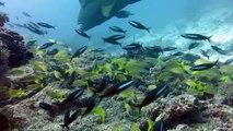 Attractive Undersea Biyadhoo Resort House Reef | Travel Biyadhoo Resort House Reef  holidays