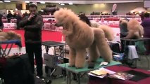 Sanremo 61 esposizione canina internazionale  2010
