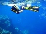 bio Red Sea plongée et snorkeling Egypte El Quseir Marsa Alam nov 2009 mer rouge dive