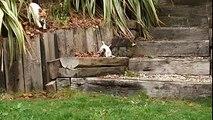 eleveur chien élevage de chien cerfpa formation