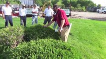 How to Trim & Prune Trees & Shrubs Basic Training