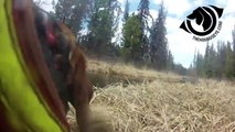 Hounds Eye Hunting Dog Cam and Vest. Spring 2014 Bear Hunting