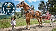 World's Tallest Horse - Meet The Record Breakers - Guinness World Records