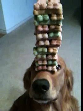 Dog balancing treats, Jenga dog