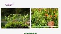 FSc Biology Book1, CH 9, LEC 6; Classification of Bryophytes-Bryopsida