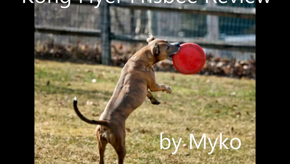 Kong Flyer Dog Frisbee Review by Myko