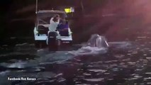 Whale breaches next to boat allowing fisherman to remove plastic