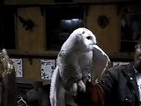 Snowy Owl in wildlife rehab facility