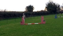 jerry leigh walk trot canter jump cute cob. 14hh just 5 yrs old