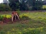 Foals running around playing