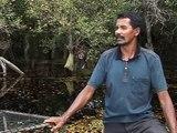 La biodiversidad de Indonesia corre peligro