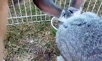 Thumper Bugs Bunny