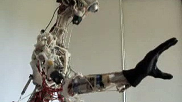 Cronos robot: different angles