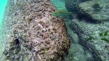 Les Seychelles 2013 : Voyage de noces avec GoPro