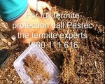 Termite and pest control Sydney. What do termites look like?