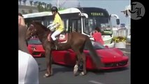 Cheval VS Ferrari : grand coup de sabot!