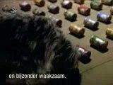 pub + humour + chien + chat sécurité totale !!!