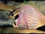 Snake eating egg - Todavia no podemos entender como esto es posible