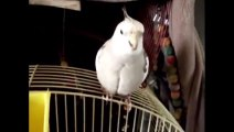 These funny and amazing animals Funny videos about animals in 2013 Humor! Joke! Laughter!