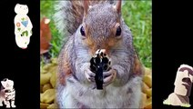Funny Animals Jok s Animal Compilation Funny Dog Pi tur  Animals Funny Vid os For Kids