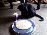 Gribouille le petit chat noir avec son nouveau jouet